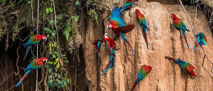 Amazonas-Regenwald-725x310px