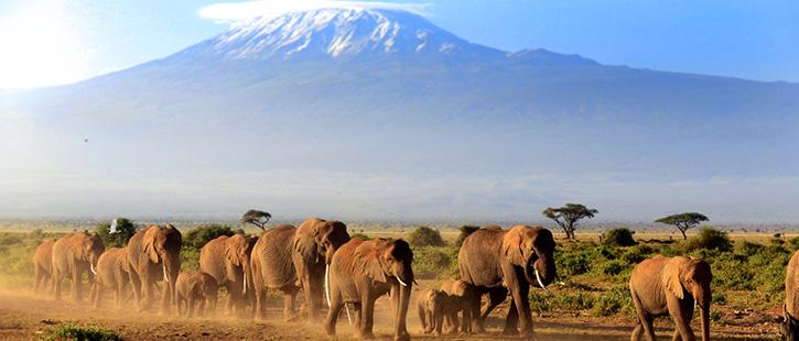 Amboseli-725x310px