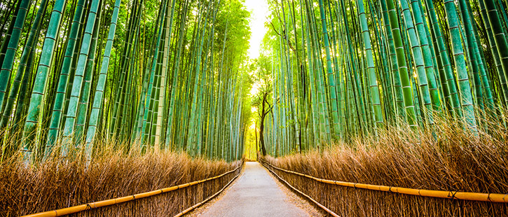 Arashiyama-725x310px
