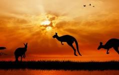 Australien-Kängurus-1-1170x500px