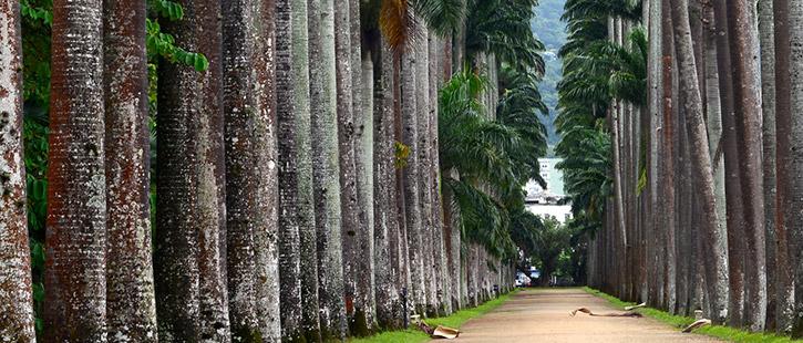 Botanischer-Garten-725x310px