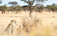 Botswana-725x310px
