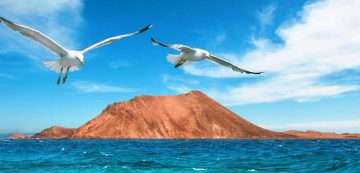 Wild seashore in Fuerteventura
