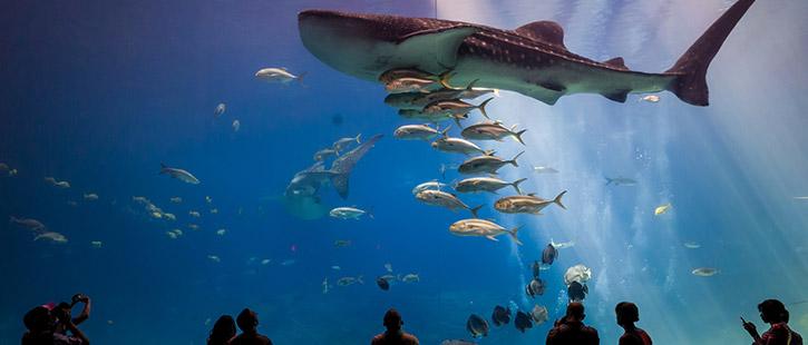 Georgia-Aquarium-725x310px