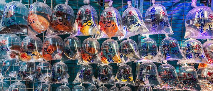 Goldfish-Market-725x310px
