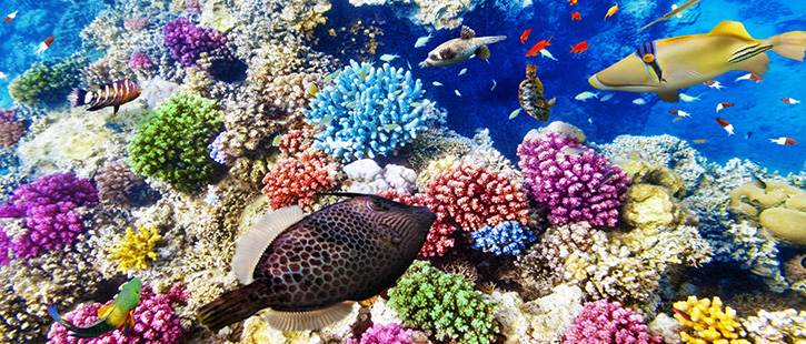 Great-Barrier-Reef-Underwater-2-725x310px