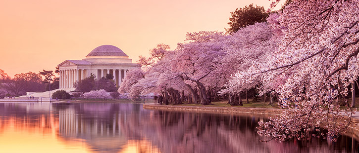 Jefferson-Memorial-725x310px