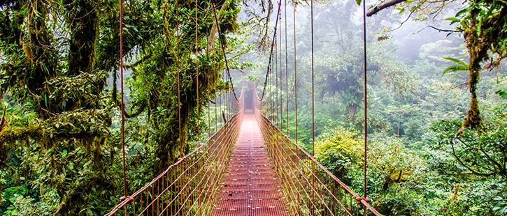 Monteverde-Regenwald-725x310px