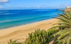 Palm-tree-on-Morro-Jable-promenade-on-Jandia-peninsula,-Fuerteventura,-Canary-Islands,-Spain-725x310px