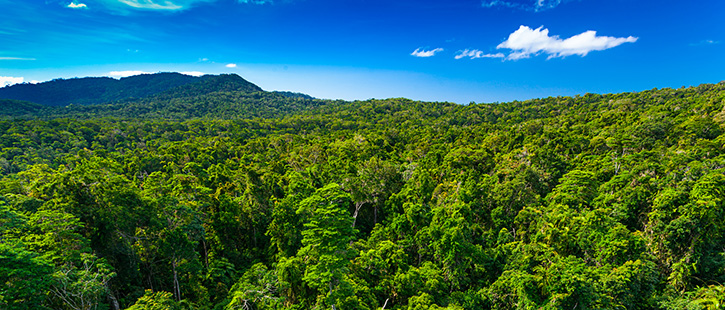 Rain-forest-from-air-near-Kuranda,-Queensland,-Australia-725x310px