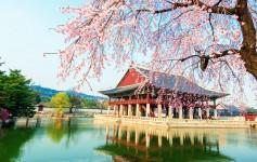 Seoul-asien tempel kirsche