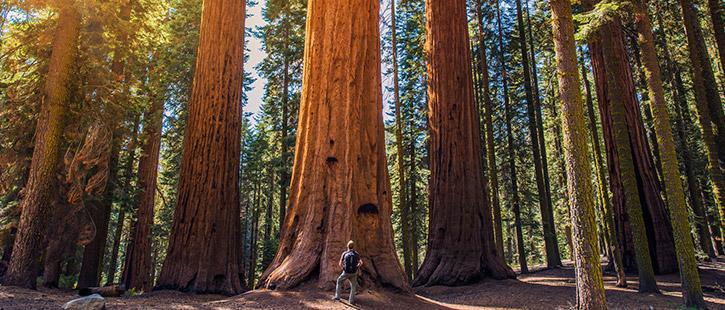 Sequoia-725x310px