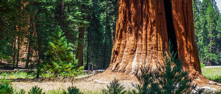 Sequoia-National-Park-3-725x310px
