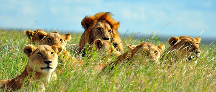 Serengeti-725x310px