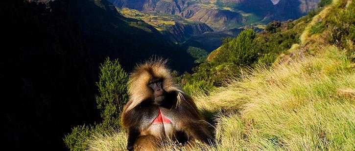 Simien-National-Park-725x310px