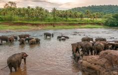 Sri-Lanka-elefanten natur asien