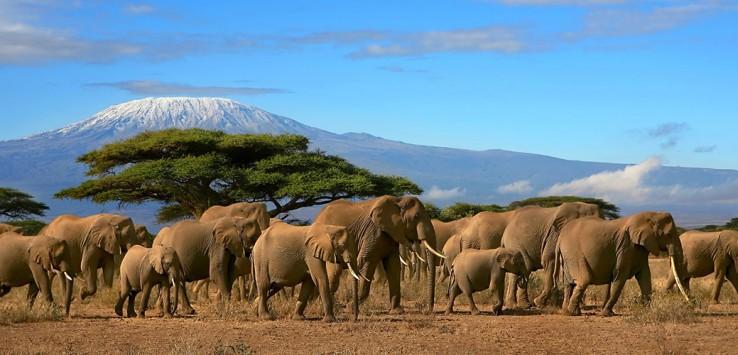 Tansania Afrika elefant natur