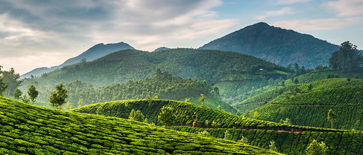 Teeplantagen-Munnar-725x310px