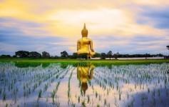 Thailand-Buddha-Tempel-Natur-Asien-1-1170x500px