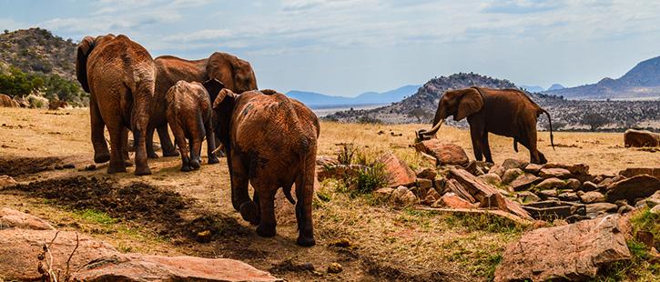 Tsavo-Ost-Nationalpark-725x310px