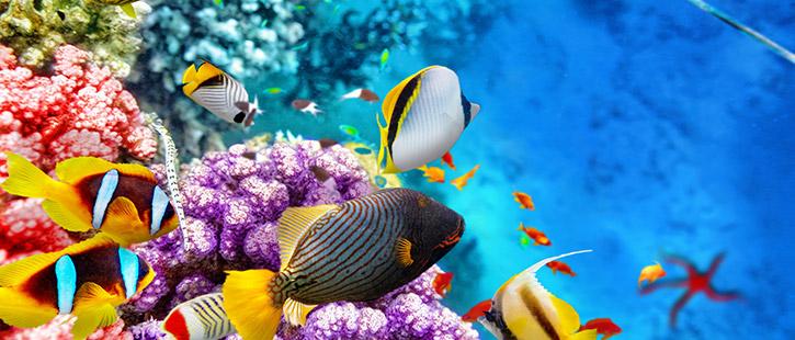 Underwater-Maldives-725x310px