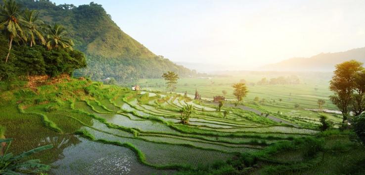 bali-natur asien reis indonesien