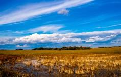 everglades-florida-usa natur