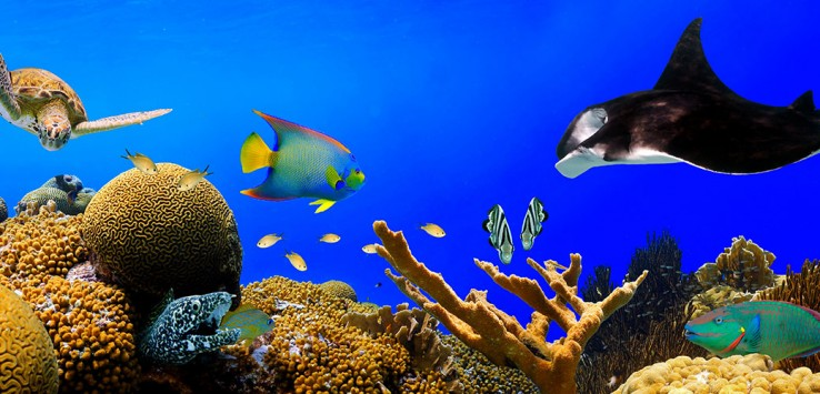 Malediven Meer Holiday Tauchen Korallen
