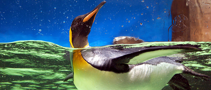 penguin-725x310px