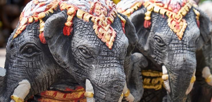 phuket asien elefant