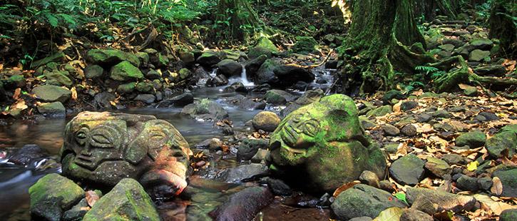 rainforest-bora-bora-725x310px