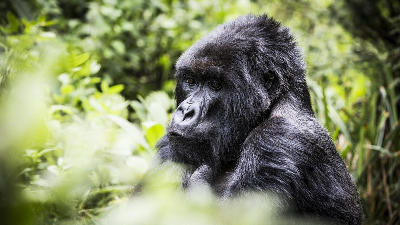 Wilderness Safaris Ruanda